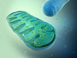 generación de mitocodrias