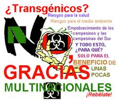 Stop Transgénicos