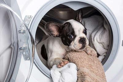 mascota en lavadora