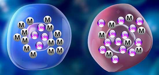 msgnesio-calcio homeostasis