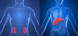 limpiezas hepáticas y renal