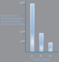 acortamiento telómeros con la edad